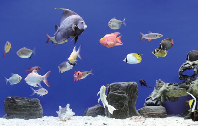 Noticias manmin peces de agua dulce y agua salada for Peces agua dulce